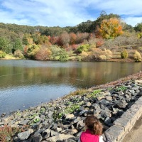 An Autumn Day in the Adelaide Hills